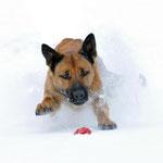 Lina tobt im Schnee (Foto: M. Liebelt)