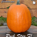 Rock Star f1