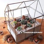ハオルチアの温室