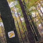 Goldsteig Wanderwegmarkierung