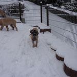 Unser erster Ausflug im Schnee