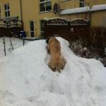 Herrchen hat mir ein Schneehügel gebaut