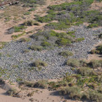 Crested Tern colony from the air