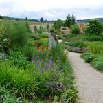 Farbige Tupfer in einem wohl riechenden Garten.