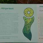 Im Heilkräutergarten sind die Beete wie ein liegender Körper gestaltet.