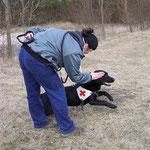 Ansatz des Rettungshundes zur Suche