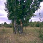 Kommt der Gesuchte nicht vom Baum... kommt der Hund eben rauf...