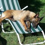 Auch Diensthunde halten Mittagsschläfchen