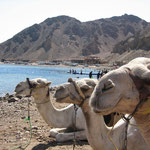 Camel Dive the magnificent Blue Hole in Dahab, Egypt