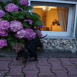 ups,ist die Blume groß; 13.07. 2012
