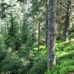 Bannwald Wilder See