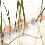 Märchensee 50x70 cm