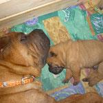 Мона с щенком
