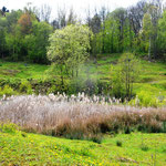 Biotop Ochtersum - Foto: Dieter Goy