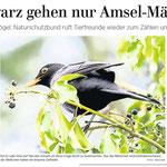 """Bericht """"Stunde der Gartenvögel 2017"""" - mit frdl. Erlaubnis der HAZ"""