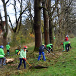 Kreisverband Hildesheim: Baumpflegemaßnahmen mit den Baumbotschaftern - Foto: Andreas Kaether