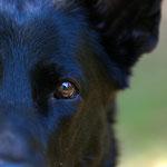 Portfolio Hunde