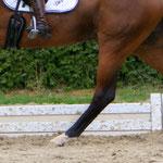 Portfolio Pferde