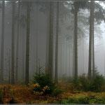 Nebelwald von Hans Lauth