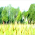 Gemalte Bäume von Hans Lauth