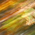 Herbstwind von Walter J. Pilsak