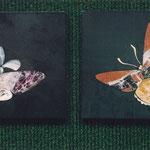 Бабочки   10х10 см