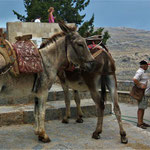 Also du kannst auf dem Rücken eines Esels auf die Akropolis kommen ;-)))