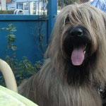 ich der Hundeschisser...   mit Freund Dexter unterwegs zum Käffchen ;-)