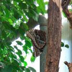 ;-))) Ein Tag im Schmetterlingspark