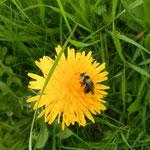 Blumen und den Bienen