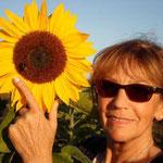 unbeschadet gelandet bei den Bienen, Wespen, Hummeln und Sonnenblumen
