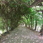 dem Adam-Mickiewicz-Park