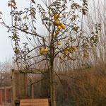 Apfelernte ist gelaufen, hier wird an die Vogelwelt gedacht