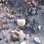 Steine gesucht