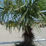 unter Palmen liegen...