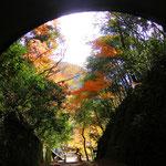 亦楽のトンネルを抜けると一面の秋だった