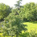 Un vue du jardin