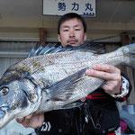 4月5日 磯釣りで川口さん ガバチヌ53.5㎝