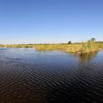 ... durch das Backwater des Kwando.