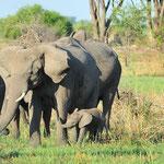 Schon am ersten Abend besuchten wir u.a. diese Elefantenherde,...