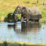 """....zu den """"Sorgenkindern"""" des WWF. Denn trotz des Engagements der Umweltschützer ist die Wilderei noch längst kein geschlossenes Kapitel."""