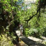eine der 7 Brücken bis zur Finca Acaime - foto by chapoleratours