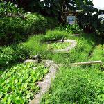 Ökologische Wasseraufbereitung auf der Farm - foto by chapoleratours