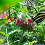 Im Biopark Bonita Farm Pereira - foto by chapoleratours