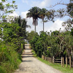 Auf dem Weg zur Granja Mama Lulu - Quimbaya - foto by chapoleratours