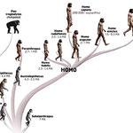 svp ne mettez pas le traditionnel schéma de l'évolution de l'homme en partant du singe pour finalement devenir homme c'est FAUX!  Je vous conseille plutôt ce genre de chose:  http://www.hominides.com/data/images/illus/image-prehistoire/famille-des-hominid