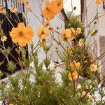 Sommerblumen oben bei der Primarschule