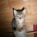 Katze 11/2015 vermittelt