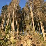 Durch Sturm und Käfer aufgerissene Wälder im Tourismusbrennpunkt_Schluchsee_05-2020