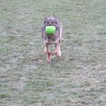 Hares und sein neues Spielzeug